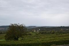 viaggio-studio-vino14